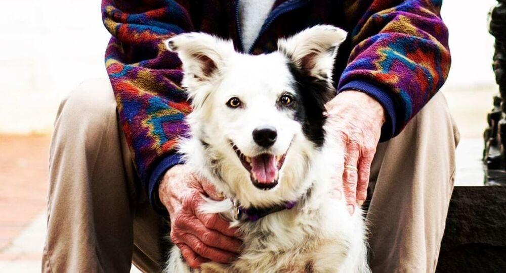 Yaklaşık bin kelimeyi anlayabilen, dünyanın en zeki köpeği 15 yaşında öldü