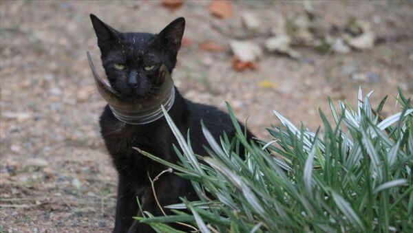 Kurtarılmaya çalışılan 'inatçı' kedi yakalandı - Sputnik Türkiye