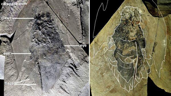 Kanadalı paleontologlar, Cthulhu'ya benzeyen antik bir su canlısına ait kalıntılar buldu - Sputnik Türkiye