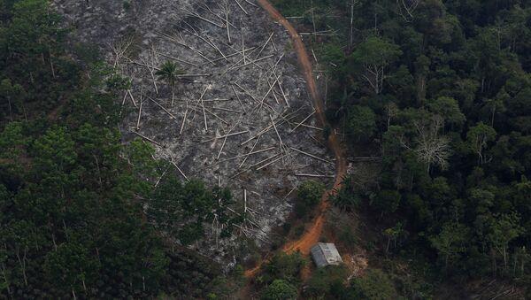 Amazon ormanlarında tahribat - Sputnik Türkiye