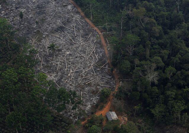 Amazon ormanlarında tahribat
