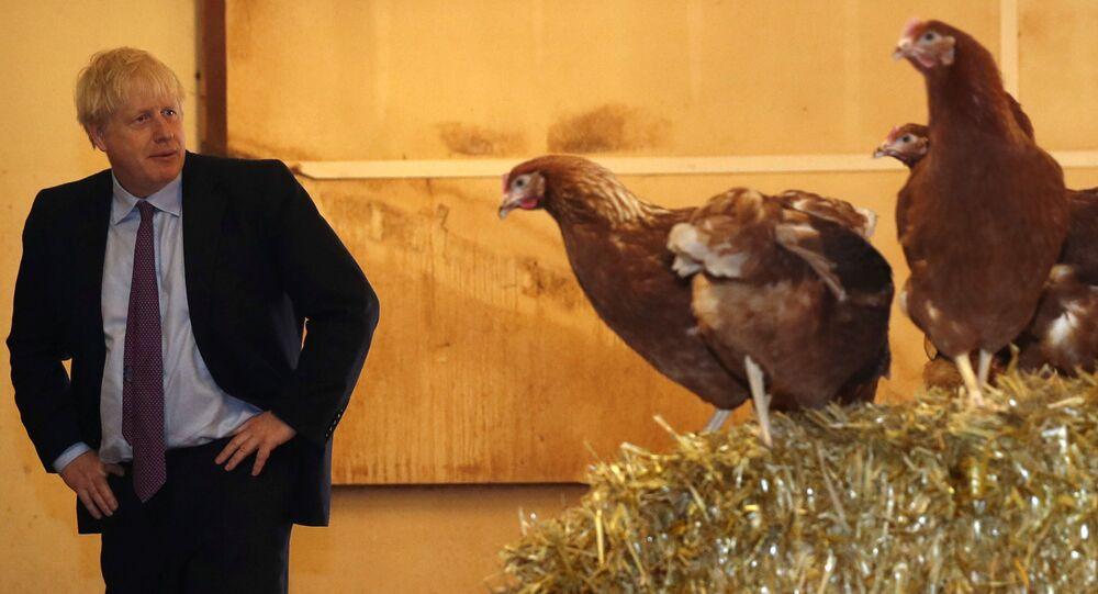 Boris Johnson, Brexit sonrasının tarım politikalarına destek arayışında tavuk çiftliklerini ziyaret ederken