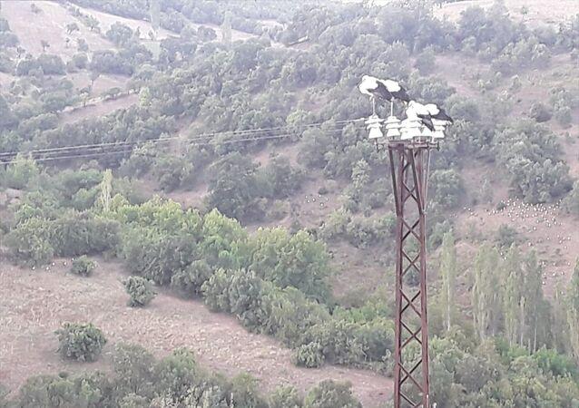 Balıkesir'in Sındırgı ilçesinde, göç yolları üzerinde bulunan yüksek gerilim hatlarına konan çok sayıda leyleğin akıma kapılıp ölmemesi için 12 saat boyunca elektrikler kesildi.