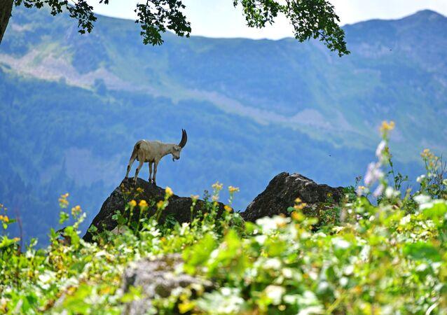 Ritsa Milli Parkı'ndaki hayvan aleminde yaygın Kafkas türlerinin yansıması görülür. Burada yaşayan hayvanlar arasında da Kafkas dağ keçisi,  dağ tavuğu, Kafkas huş tavuğu, sarı gagalı dağ kargası, kızıl akbaba, altın kartal gibi endemik türler var.