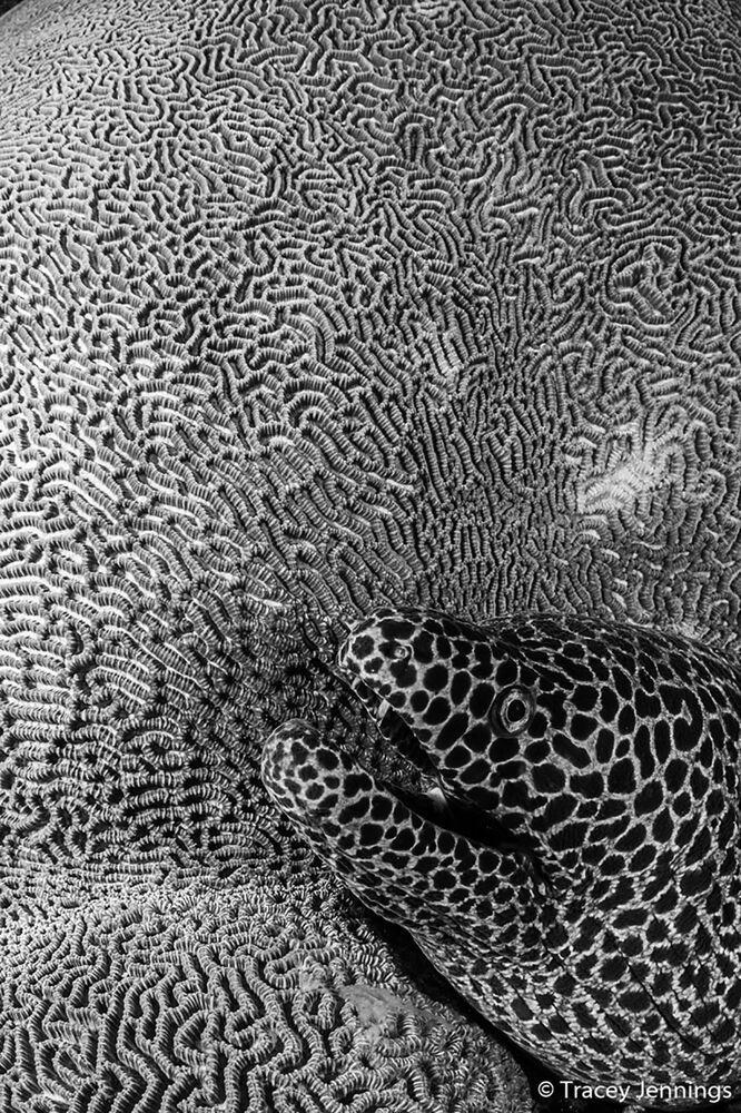 Yarışmanın Tek Renkli Resim kategorisinde birinci seçilen Tracey Jennings'in Texture isimli fotoğrafı.