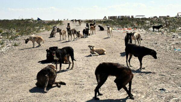 'Lüleburgaz'da 300 köpek kayboldu' iddiası - Sputnik Türkiye