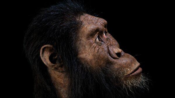 Etiyopya'da 3.8 milyon yıl öncesine tarihlenen, insanın ilk öncüllerine ait 'neredeyse eksiksiz' bir kafatasını inceleyen bilim insanları türün nasıl bir yüze sahip olduğunu ilk kez açığa çıkardı. - Sputnik Türkiye