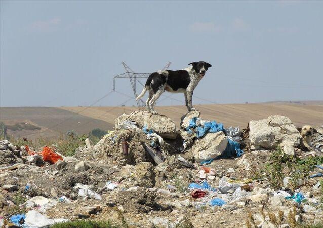 Hayvan Hakları İçin Birleşim Hareketi Başkanı Mehtap Özer, eski çöplük alanında yaklaşık 300 köpeğin kaybolduğu iddiasıyla ilgili Lüleburgaz Belediyesi Veterinerlik Birimi Sorumlusu Anıl Ergin hakkında görevini kötüye kullanmaktan suç duyurusunda bulundu.