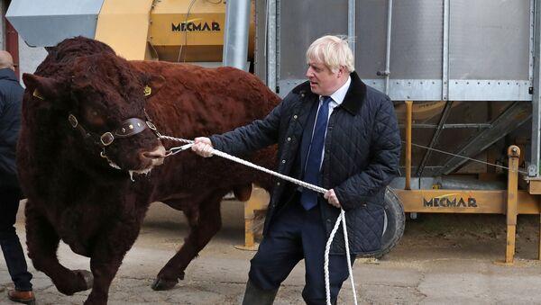 Brexit çıkmazına saplanan İngiltere yakın tarihinin en çalkantılı döneminden geçerken Başbakan Boris Johnson İskoçya'nın Aberdeen kentinde çiftlik ziyaretinde, 6 Eylül 2019 - Sputnik Türkiye