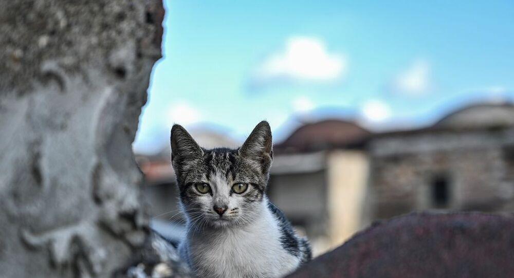 İstanbul - Kedi