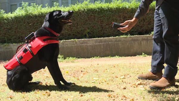 Köpekler için akıllı yelek - Sputnik Türkiye