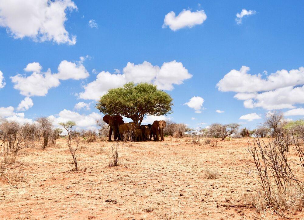 Fotoğrafçı Robert Marchan'ın Kenya'da çektiği  Bana Bir Sığınak Ver isimli görüntü.