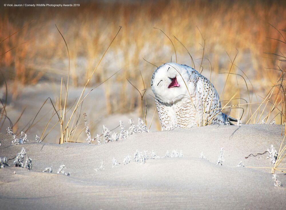ABD'li yarışmacı Vicki Jauron'un kar baykuşu görüntüsü.
