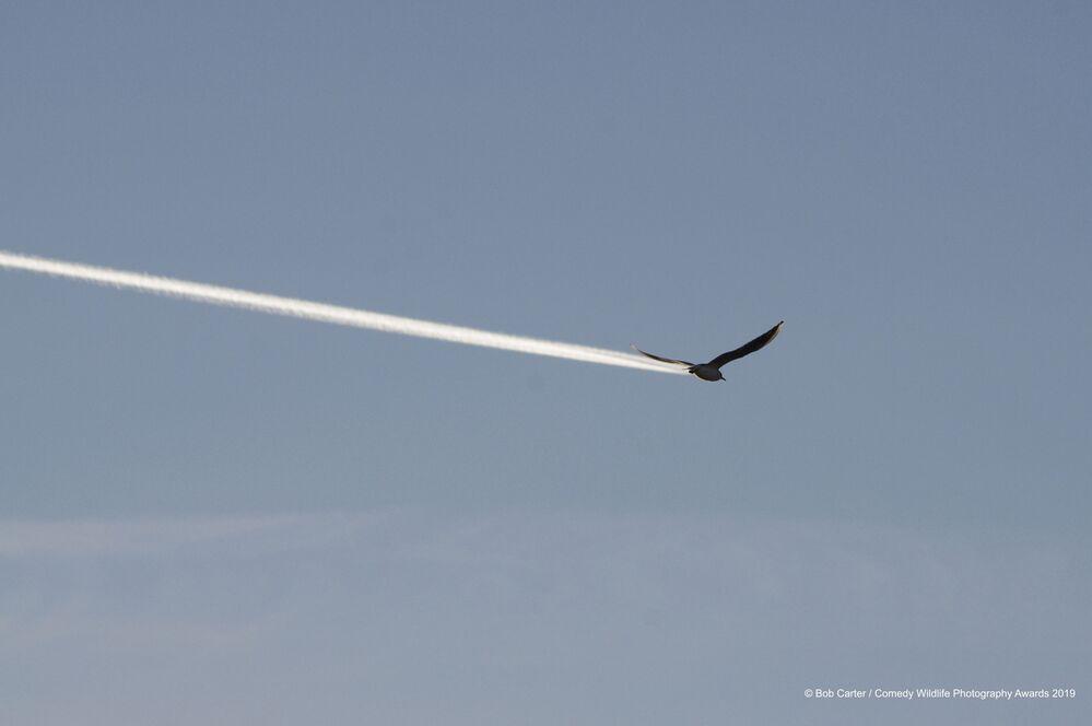 İngiliz yarışmacı Bob Carter'in 'Kuş mu, yoksa uçak mı?' çalışması.