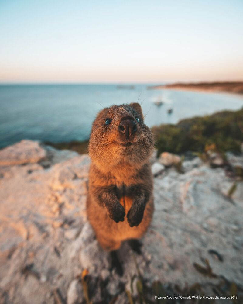 Avustralyalı fotoğrafçı James Vodicka'nın 'Pardon, bakar mısınız' isimli çalışması.