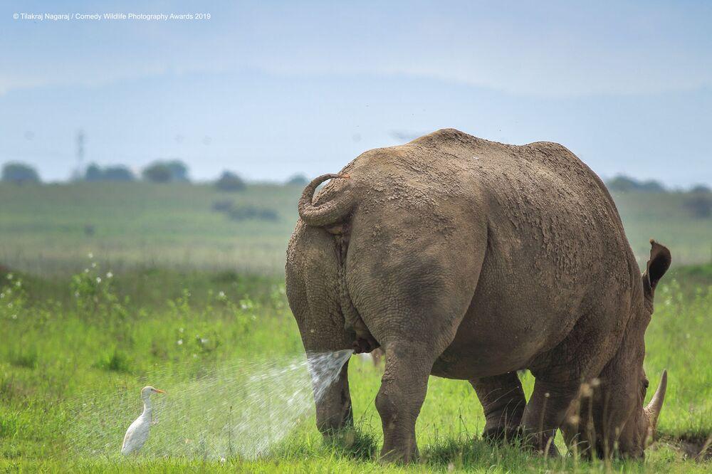 Yarışmanın finalistlerinden Kenyalı fotoğrafçı TilakRaJ'NagaRaJ'ın görüntüsü.