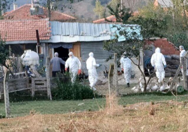 Toprağa gömülü 6 bin tavuk ölüsü bulundu, mahalle karantinaya alındı