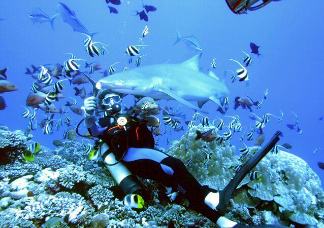 Fransız Polinezyası açıklarında köpekbalığını besleyen dalgıç.