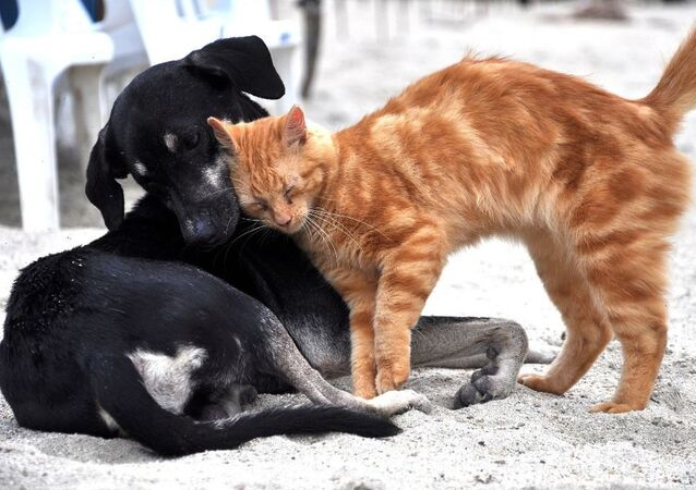 Köpek-Kedi