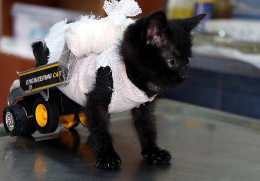 Trakya Üniversitesi öğrencileri tarafından Kırcasalih beldesinde bulunan, arka bacakları tutmayan kedi yavrusunun tedavisi için Edirne Belediyesi Sokak Hayvanları Barınağı ile iletişime geçildi.