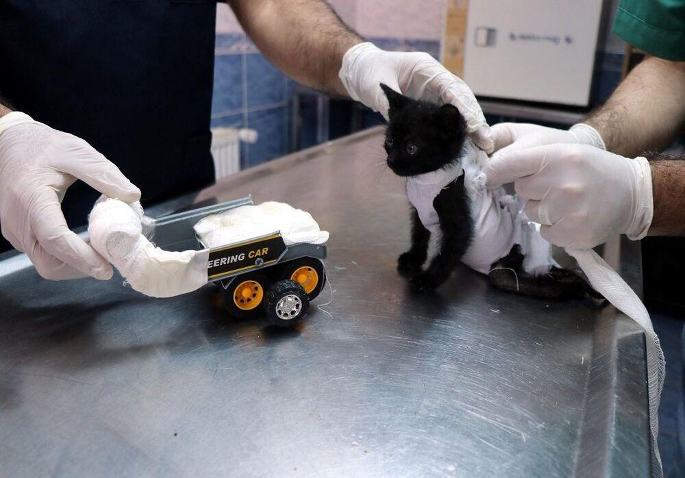 Barınak yetkilileri kent merkezine getirdikleri kedi yavrusuna oyuncak kamyondan yürüteç yaptı.