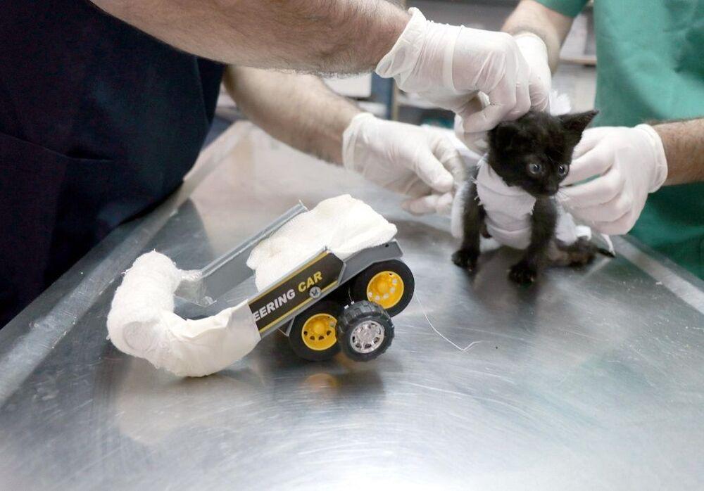 Yetkililer kediye Negro adını verdi.