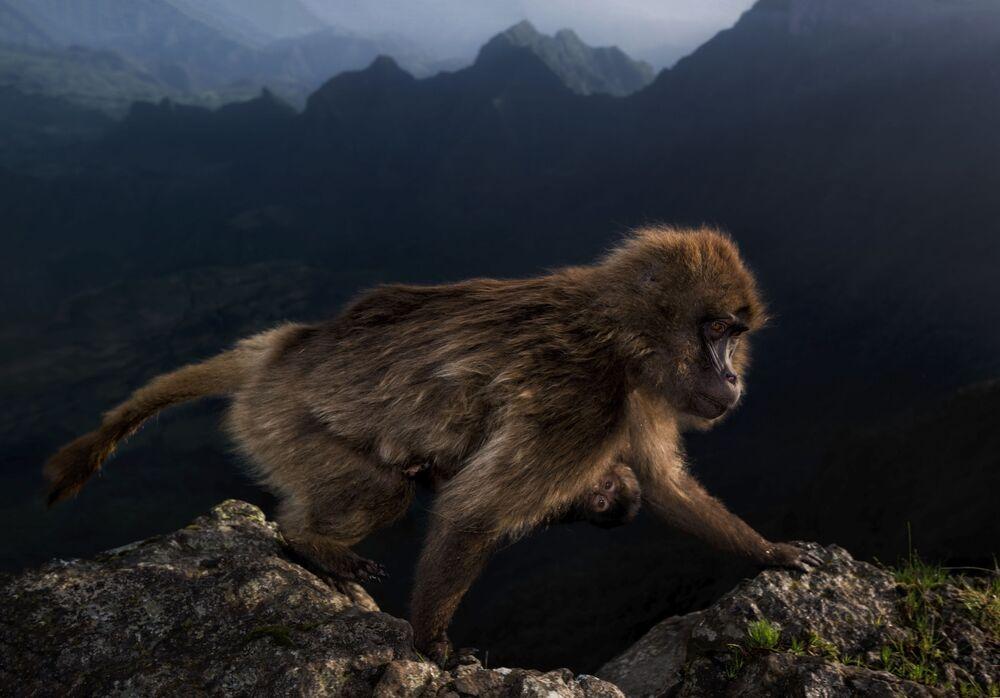 2019'un Vahşi Yaşam Fotoğrafçısı Yarışması'nda 15-17 yaşındaki foroğrafçıların yarıştığı kategoride birincilik ödülünü kazanan İtalyan fotoğrafçı Riccardo Marchgiani'nin çalışması.