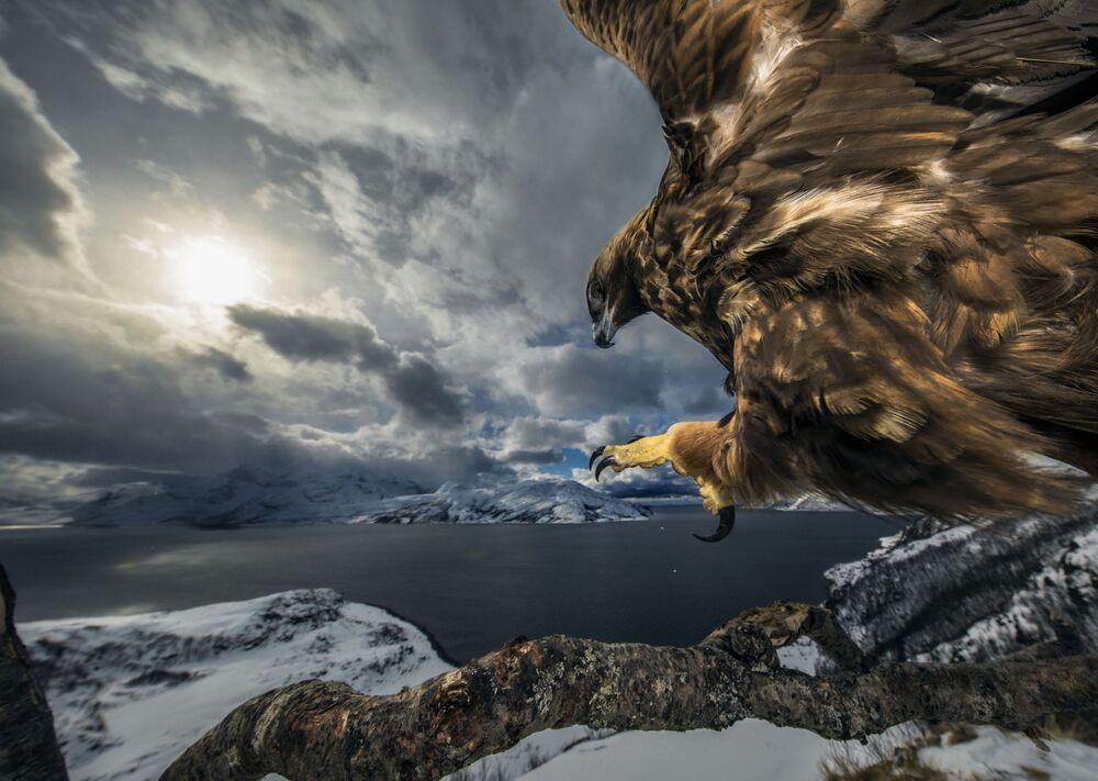 2019 Yılının Vahşi Yaşam Fotoğrafçısı Yarışması'nın 'Davranış: Kuşlar' kategorisinde birinci seçilen Norveçli fotoğrafçı Audun Rikardsen'in Kartal Diyarı isimli çalışması.