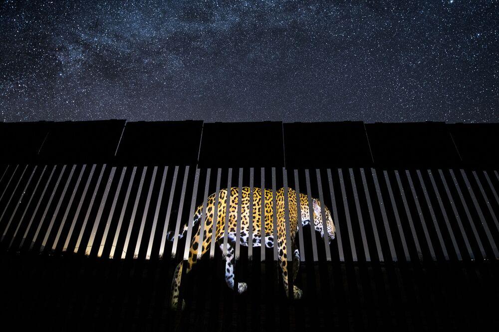 Yarışmanın Tek Kare kategorisinde birinciliğe layık görülen Meksikalı fotoğrafçı Alejandro Prieto'nun çalışması.