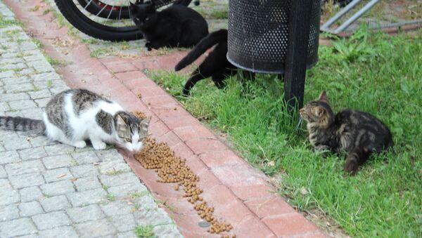 Küçükçekmece'deki kediler - Sputnik Türkiye