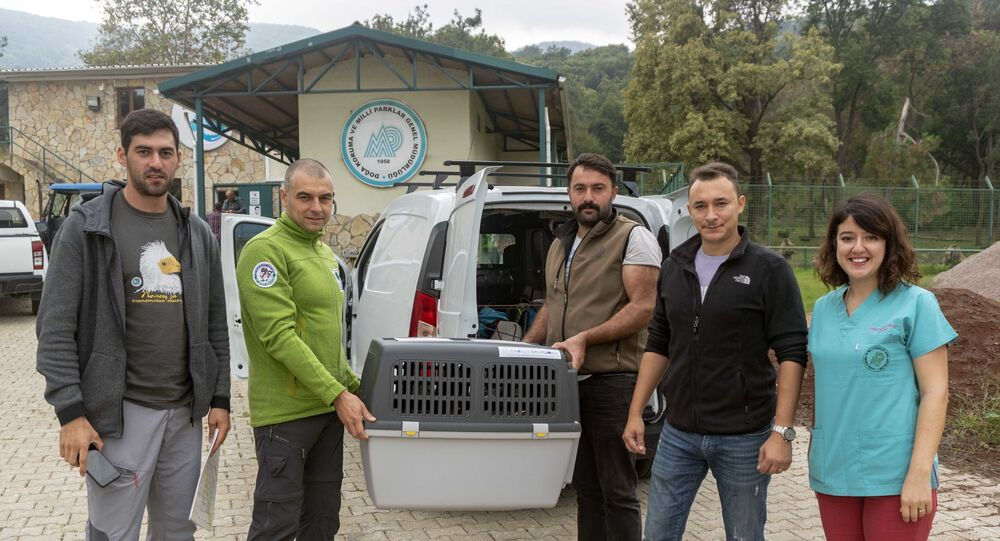 Geçen yıl Adana'da yaralı olarak bulunan Mısır akbabası, Doğa Koruma ve Milli Parklar Genel Müdürlüğü tarafından tedavisi tamamlanarak yumurtadan çıktığı ülke olan Bulgaristan'a teslim edildi.