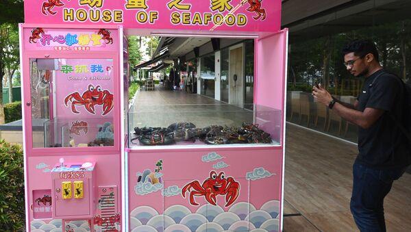 Singapur'da bir restoran canlı yengeç yakalama makinesi koydu. - Sputnik Türkiye