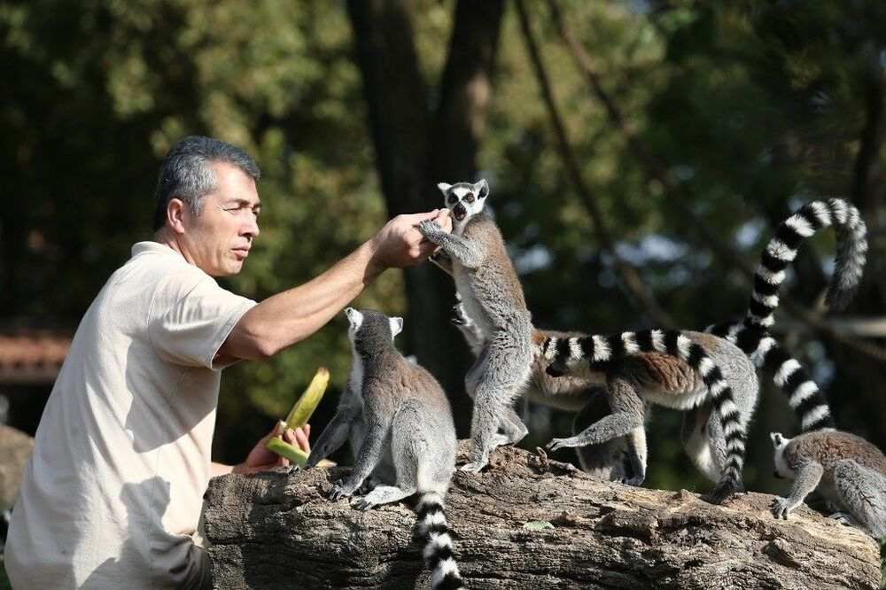 Dünyada Madagaskar başta olmak üzere çeşitli ülkelerde her ekim ayının son cuma günü Dünya Lemurlar Günü olarak kutlanıyor.