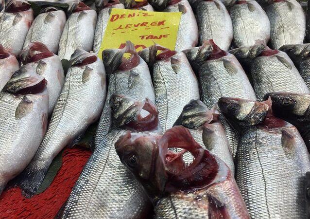 Bazı balıkçılar solungaçlarını kırmızıya boyuyor
