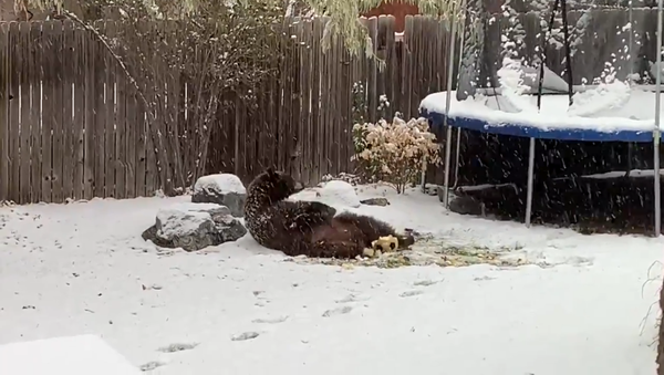 Evinin bahçesinde topla oynayan ayıyı böyle görüntüledi - Sputnik Türkiye