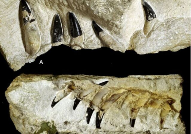 Polonya'da bulunan fosil