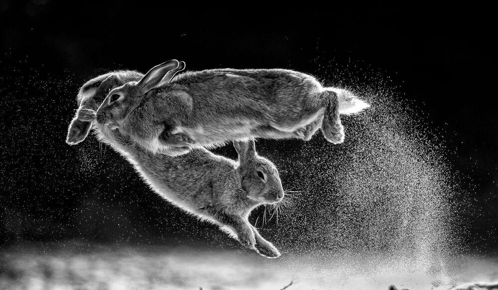 2019 Yılının Doğa Fotoğrafçısı Yarışması'nı kazanan Macar fotoğrafçı Csaba Daróczi'nin 'Atlayış' çalışması.