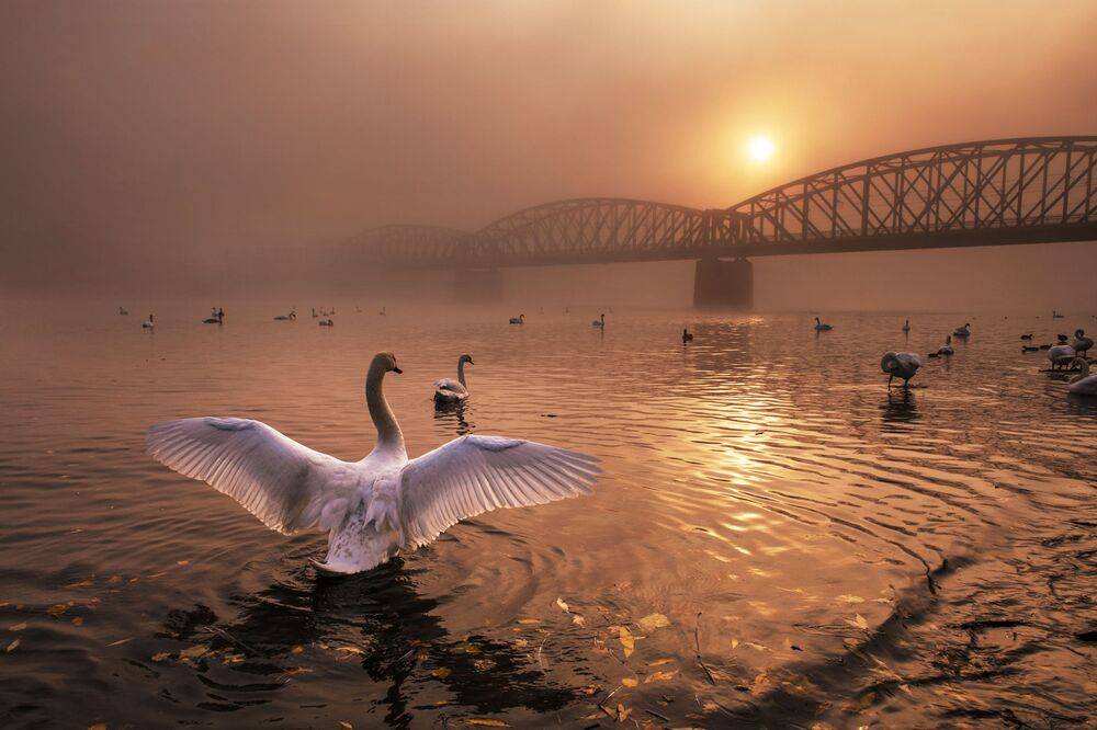 2019 Yılının Doğa Fotoğrafçısı Yarışması'nın Kuşlar kategorisinde birinci seçilen Çekyalı yarışmacı Peter Cech'in 'Güneşi Selamlarken' isimli çalışması.