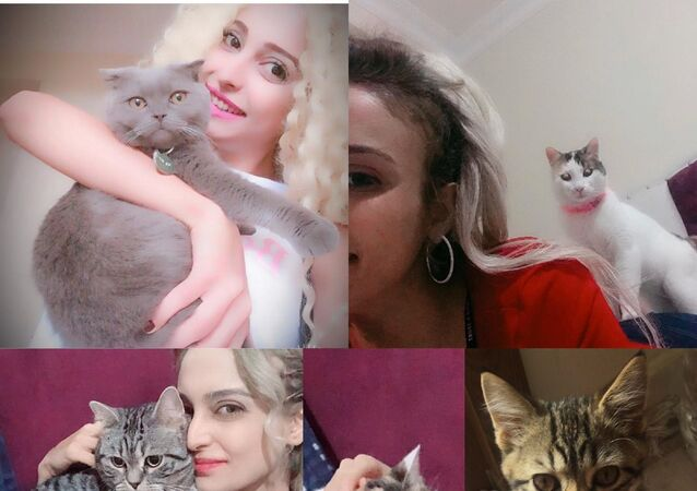 Kağıthane'de evde beslediği 5 kediden 4'ü öldürülen Ayşegül Bahar, kedileri öldürdüğü iddiasıyla eski sevgilisi Cihan Y.'yi savcılığa şikayet etti.