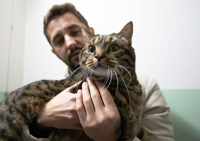 Fotoğrafta: Fazla kiloları nedeniyle kabine alınmayan şişko kedisi Viktor'u uçağa sokabilmek için sürpriz bir yola başvuran 34 yaşındaki Mikhail Galin.   Letonya'nın başkenti Riga'dan Rusya'nın Vladivostok kentine uçarken aktarma yaptığı havaalanına giden Mihail Galin'e, kedisini 'aşırı kilo nedeniyle' uçağın kabin kısmına alamayacaklarını söylediler. Kedisini bagaj kısmına vermek istemeyen sahibininse onun için başka planları vardı. Kedisine tıpa tıp benzeyen ancak daha hafif bir kedi bulma çalışmalarına başladı.  Arkadaşları ve sosyal medyanın da yardımıya havaalanına çok da uzak olmayan bir yerde kedisine benzeyen ancak daha zayıf bir kedi buldu. O günkü uçuşunu kaçırsa da iki gün sonra başka bir uçuş ayarlayan Mikhail, kedisi Victor'un ikizi'ni ödünç aldı. Kontrol aşaması geçtikten sonra da kedisi Victor'la değiştirip uçağa geçti. Viktor ile sahibi Vladivostok'a bu şekilde uçtular.