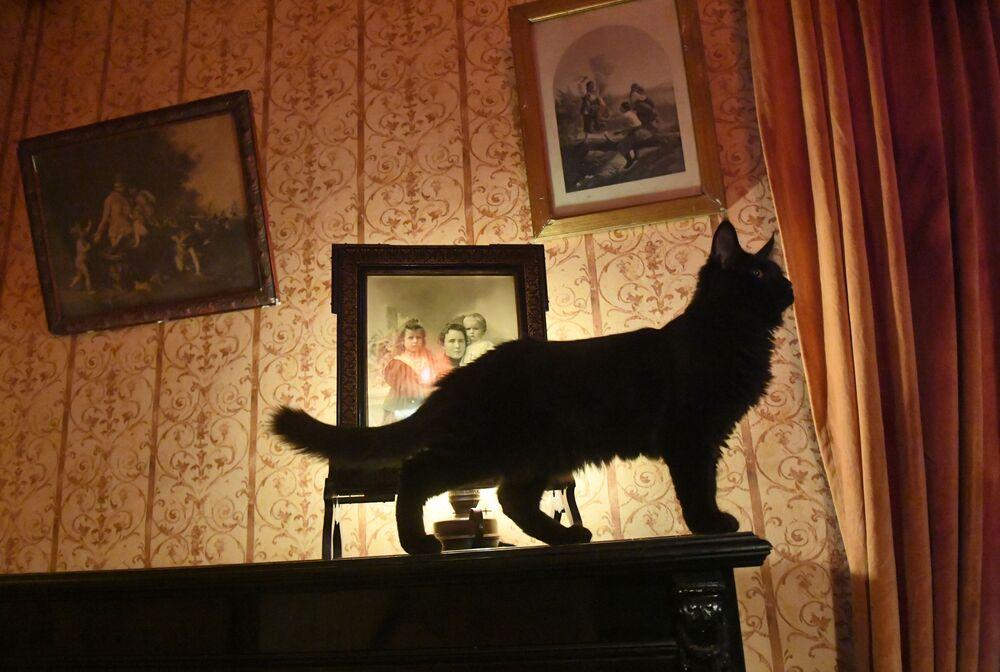 Başkent Moskova'daki ünlü Rus yazar Mihail Bulgakov'un en büyük eserlerinden 'Usta ile Margarita' romanını yazdığı ve şu an müze olarak kullanılan evin sembolü Begemot isimli kedi, müze ziyaretçilerinin yoğun ilgisini çekiyor. İsmini,  Bulgakov'un Usta ile Margarita isimli romanındaki ''Kedi Begemot'' karakterinden alıyor. Romanda siyah, tüylü ve şeytan Woland'ın yardımcısı olan bu kedi, iki ayağı üstünde yürüyebiliyor ve konuşabiliyor.