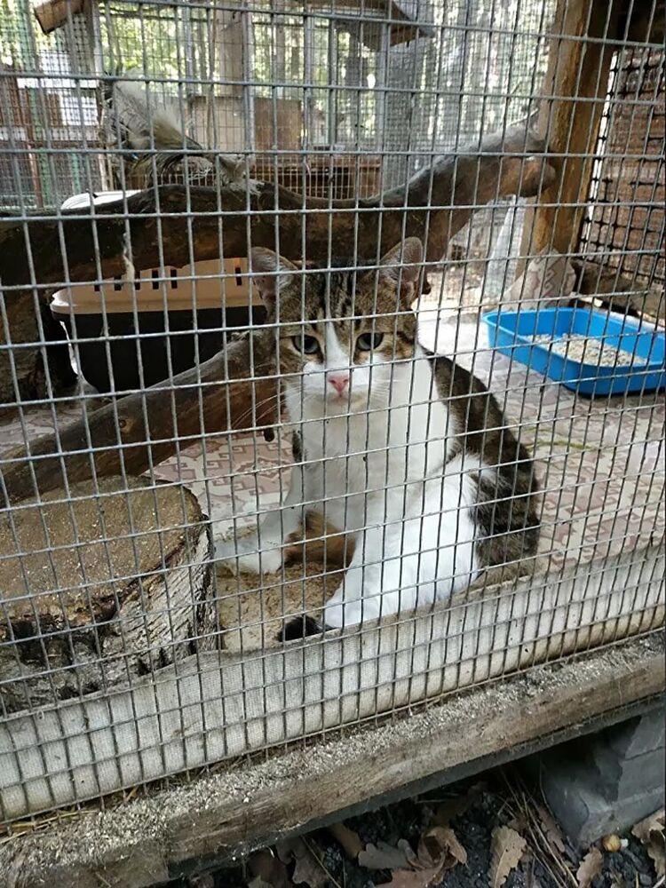 Rusya'nın Tula şehrinde uyuşturucu kuryeliği yaptırıldığı gerekçesiyle sahibiyle beraber gözaltına alınan kedi, 'soruşturmanın en önemli delili' olarak hayvanat bahçesine konuldu. Ancak, diğer hayvanlardan korkan kedi, görevlilerin dalgınlığından yararlanarak kaçtı. Gözlem altındaki kedinin soruşturma kapsamında yapılacak deneyde kullanılmasının planlandığı öğrenildi. Yapılması planlanan deneyde kedinin sahibi tarafından özel olarak yapılan tasmasına bir miktar uyuşturucu maddenin koyulup, ardından hareketlerinin izleneceği, ancak kedinin kaçması sonucu bu deneyin yapılamadığı ve soruşturmada aksamaların yaşandığı açıklandı.