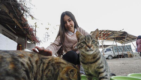 Sokak kedileri için harçlığı yetmeyince ombudsmana başvurdu - Sputnik Türkiye