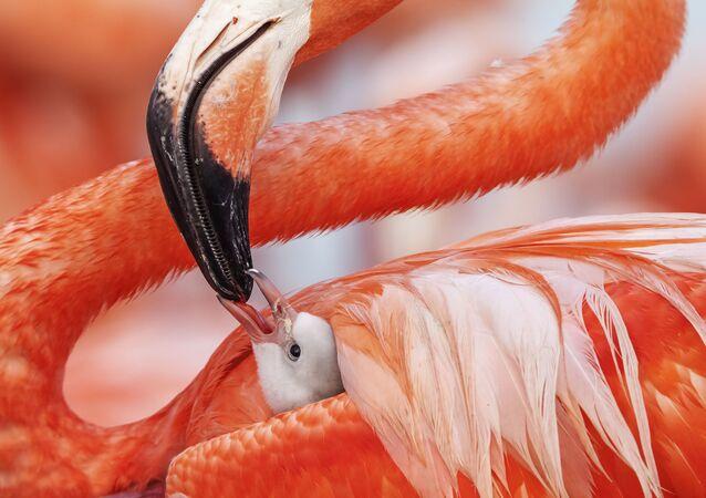 Meksikalı fotoğrafçı Caludio Contreras Koob'dan 'Beak to beak' götüntüsü.