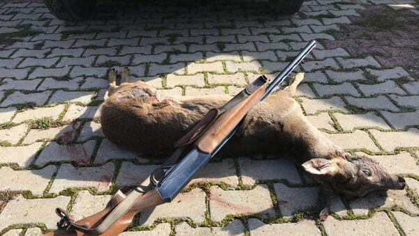 Kırklareli'de doğa koruma ve milli parklar müdürlüğü ekiplerince, koruma altındaki karacaları avladığı belirlenen avcı hakkında yasal işlem yapıldı. - Sputnik Türkiye
