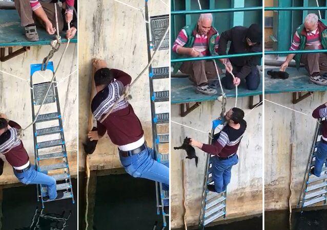 Denizli'de 5 metrelik HES kapağından suya düşmek üzere olan kediyi kurtaran elektrik teknisyeni 40 yaşındaki Adem Yılmaz, kurtardığı yavru kedinin hızla kaçması üzerine Bari bir teşekkür etseydin diye bağırdı.