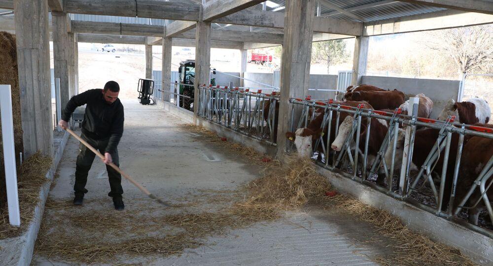 Karabük'ün Eskipazar ilçesinde tarım ve hayvancılık için kurulan tesise elektrik verilmemesi besicilik yapan 38 yaşındaki Beytullah Duman'ı mağdur etti.