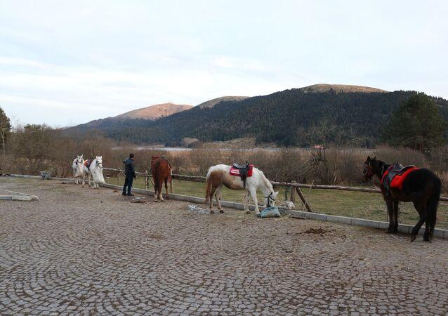 Adalar - atlar - ruam şüphesi olan atlar