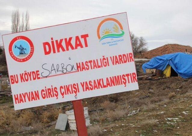 Kırşehir'de şarbon