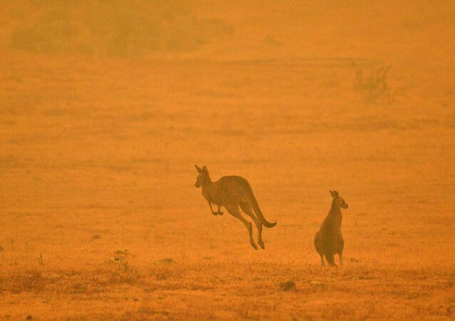 Hayvanların büyük bir kısmının alevler tarafından yutulduğu, birçoğunun da yeterli besin bulamadıkları için öldüğü belirtiliyor.